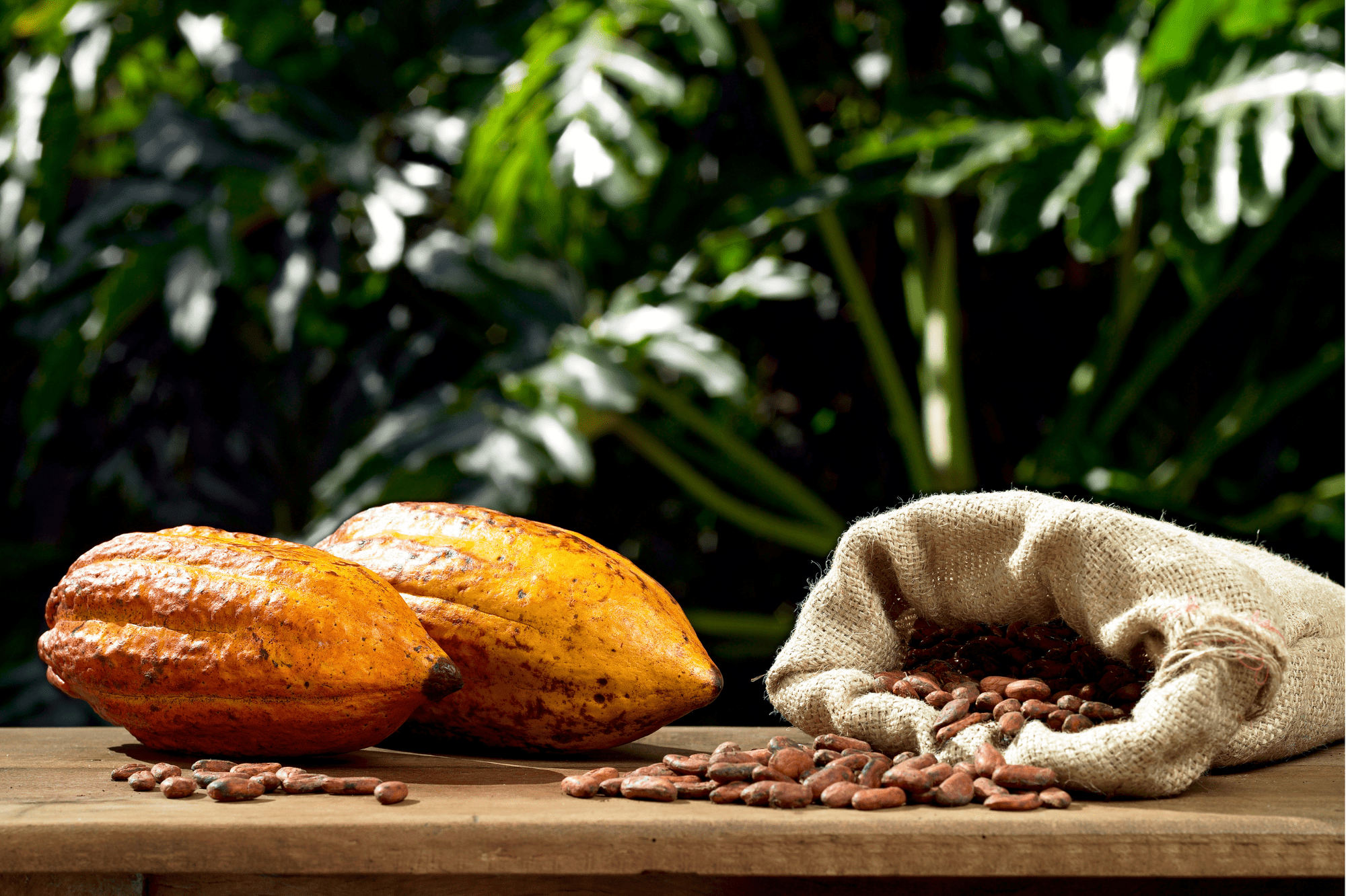 cacao cru alliance kko